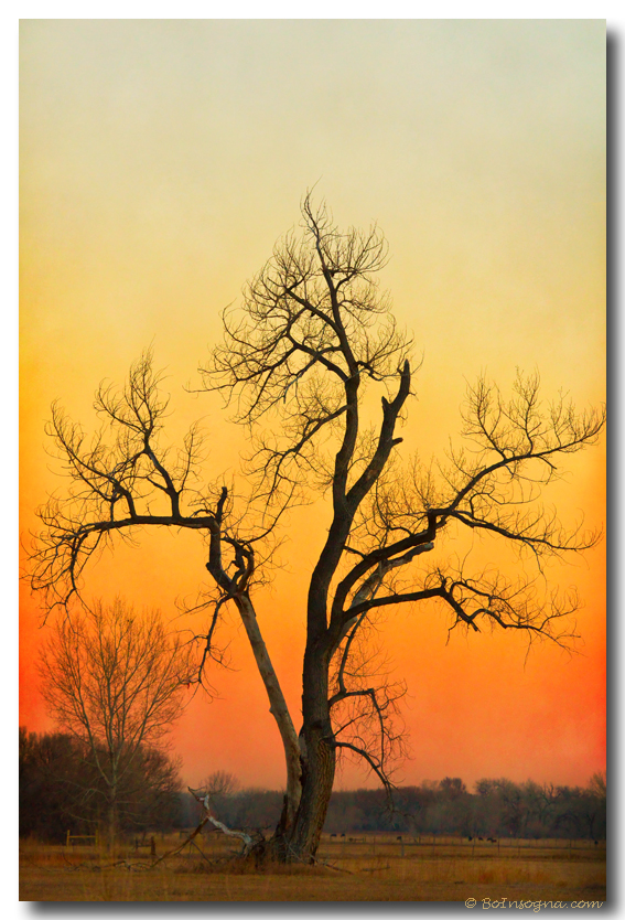 Winter Season Sunset Tree Fine Art Print