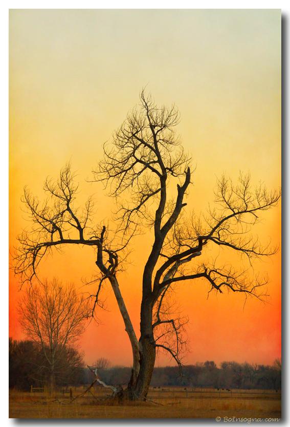 Winter Season Sunset Tree Fine Art Print
