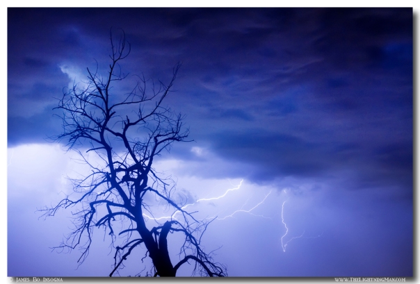 Lightning Tree Silhouette 29