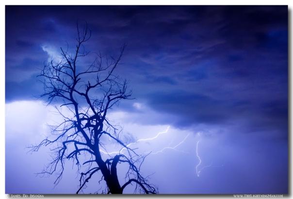 Lightning Tree Silhouette 29