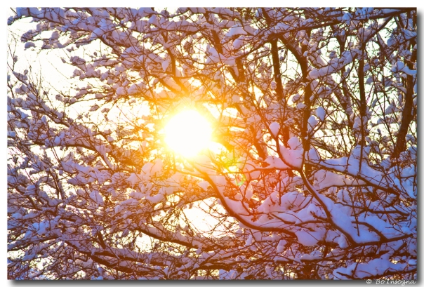 Snowy Tree Branches And Sunshine Art Prints