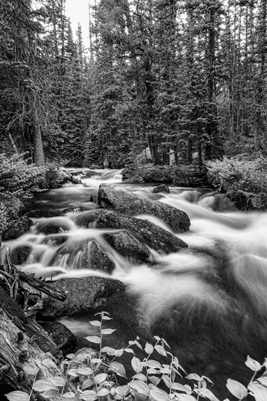 Black and White Roosevelt National Forest Stream Portrait Art