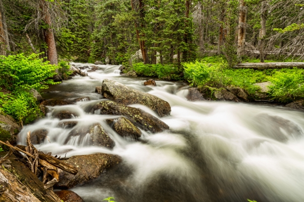 Roosevelt National Forest Stream Art Print