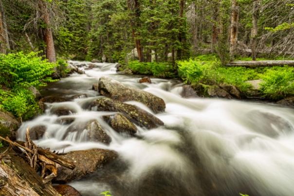 Roosevelt National Forest Stream Art Print