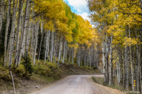 Autumn Aspen Tree Lined Rocky Mountain Road Wall Art