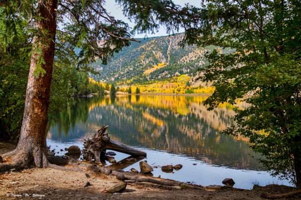 Autumn Cottonwood Lake Reflections Dreaming art print