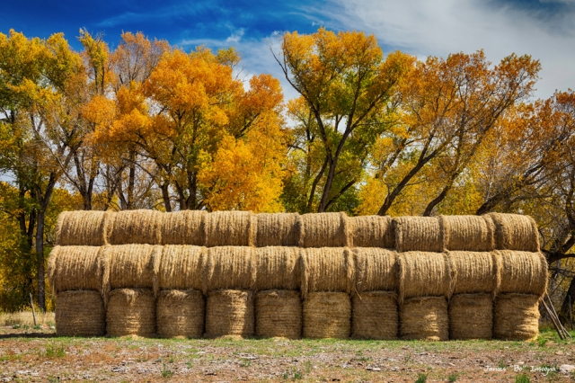 Autumn Hay Bales art print