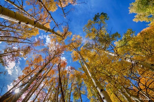 Autumn Season Sunshine Art Print