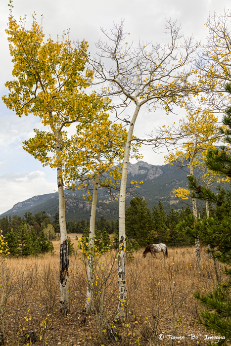 Beautiful Horse Autumn Aspen Trees Grove Grazing Art Print