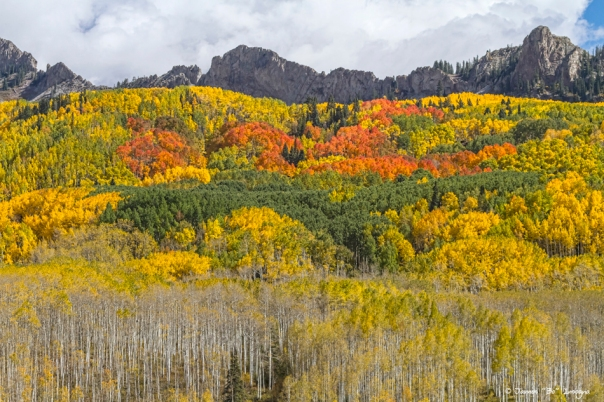 Colorado Kebler Pass Fall Foliage Art Prints