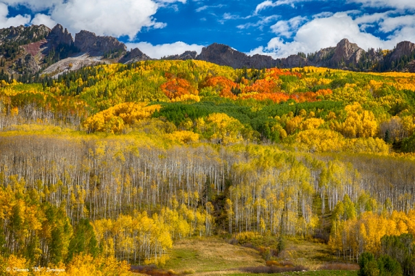 Colorful Kebler Pass Fall Foliage
