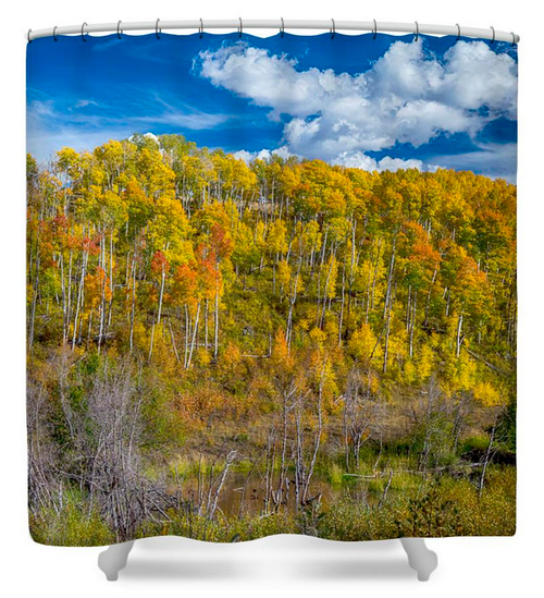 Layers of Colors of an Aspen Tree Forest Shower Curtain