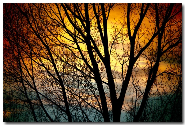 Colorful Sunset Tree Silhouette