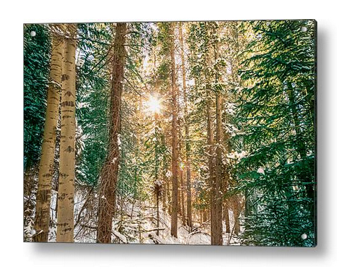 Winter Forest Sunshine Acrylic Print