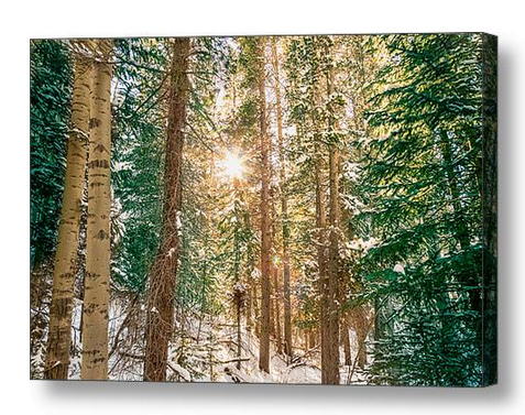 Winter Forest Sunshine Canvas Print