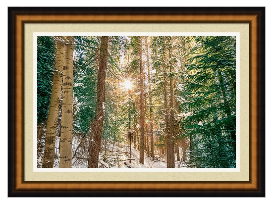 Winter Forest Sunshine Framed Print