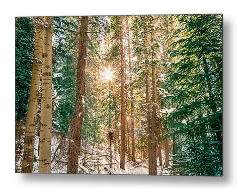 Winter Forest Sunshine Metal Print