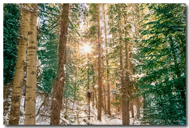 Winter Forest Sunshine
